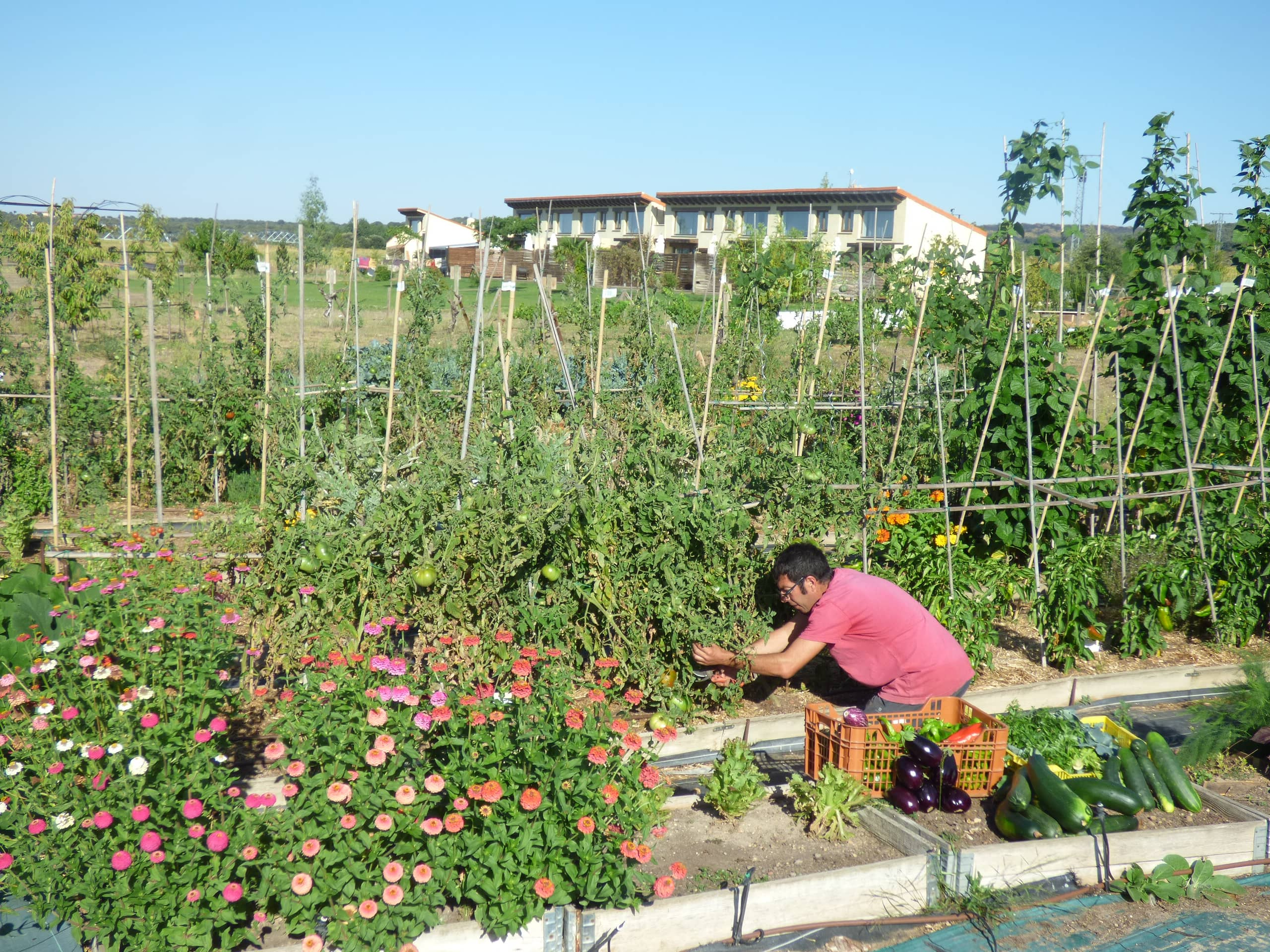 Visit our organic vegetable garden beside the Hotel